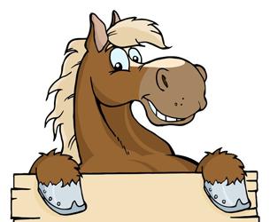 Paarden/Pony's te koop