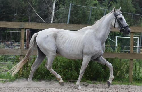 Capricho (2)