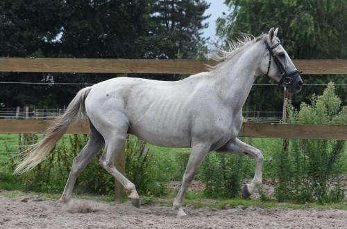Capricho (4)
